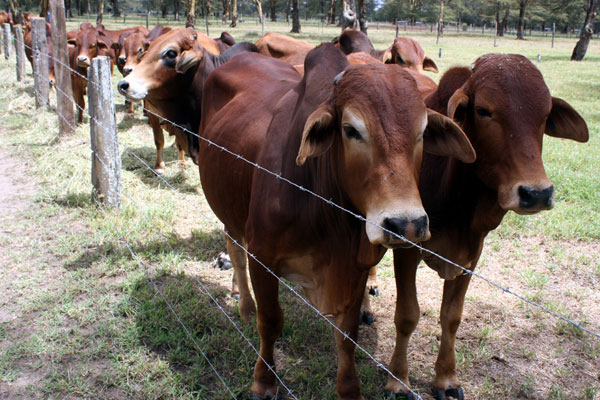 Livestock PS Segor urges pastoralists to partner with ...