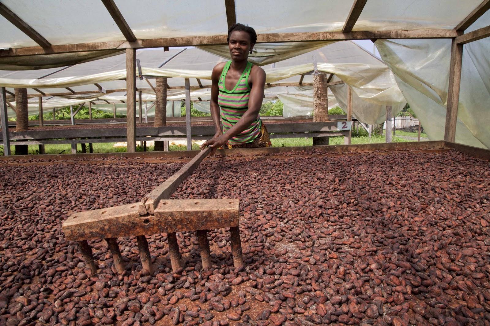 Solomon Islands Chocolate