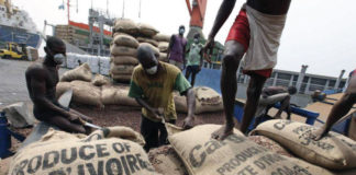 Rejected cocoa smuggled from Ivory Coast