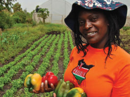 Planting for Food and Jobs targets 5000,000 farmers