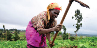 loopholes in Planting for Food and Jobs
